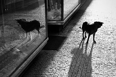 Double (lucia_eggenhoffer) Tags: street city shadow urban blackandwhite bw dog reflection monochrome animal horizontal canon photography photo flickr outdoor candid streetphotography scene double unposed decisivemoment streettog