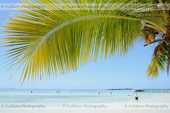 Frond (ficktionphotography) Tags: ocean sea sky sun plant nature water dock palm palmtree coconuts palmfrond moorea frenchpolynesia