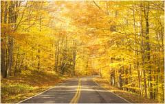 Autumn Leaves (Joe Franklin Photography) Tags: fall yellow nikon northcarolina autumnleaves parkway carolina blueridgeparkway blueridge westernnorthcarolina d90 joefranklin almostanything wwwjoefranklinphotographycom