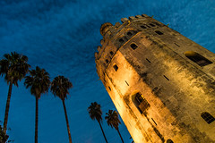Seville Blue Hour (Franco Beccari) Tags: world city trip travel blue trees vacation white holiday black color colour green tower castle tourism nature yellow photography spain nikon europe seville bluehour nikkor andalusia d600