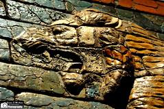 Lion's head from The Processional Street (Sumer and Akkad!) Tags: germany munich iraq lion babylon nebuchadnezzar glazedbrick processionalstreet statemuseumofegyptianart