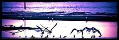 Liverpool Crosby Beach 2013 (denvillelatimer) Tags: beach liverpool crosby 2013