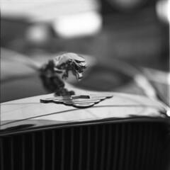 Jag (pavlov's.daughter) Tags: show blackandwhite bw classic 120 6x6 mamiya car mediumformat logo shanghai poland krakow moto vehicle jaguar cracow c330 gp3 squere fomadon