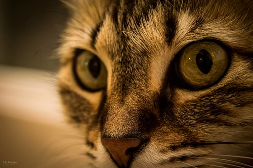 Mia up close
