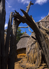 Konso Tribe Traditional Houses With Pots On The Top, Konso, Omo Valley, Ethiopia (Eric Lafforgue) Tags: poverty africa roof people house tree home vertical outside outdoors photography community day village outdoor nobody nopeople tribal unesco worldheritagesite pot hut homemade simplicity pottery omovalley homestead tradition thatchedroof ethiopia tribe cultures domesticlife anthropology developingcountries worldheritage lifestyles hornofafrica omo eastafrica ruralscene colorpicture nonurbanscene konso colourimage indigenousculture africanculture builtstructure residentialstructure colourpicture ethio1410034