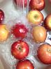 image (Paul Beppler) Tags: apfel äpple rosaceae epple eppel ebble rosengewächs äbbel rosengewächse ebbel äbble rosengewex