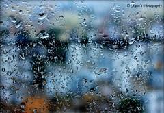 Color of Rain (Barrackpore Photolovers Association) Tags: august monsoon bpa 2014 das ayan