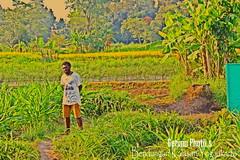 Getimo Photo's (getimoaguwinaldokeiya) Tags: di yogyakarta hati kota balik perkampungan gudeg kalasan kengan kesunyain