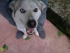 Dalton (royreylar) Tags: pets animal perro perros animales mascota mascotas