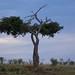 African safari, Aug 2014 - 091