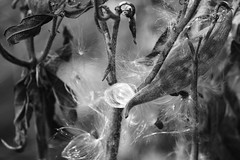 image (Eva O'Brien) Tags: park autumn plants plant fall nature woodland illinois woods nikon squirrel squirrels wildlife trails arboretum trail chicagoland lisle mortonarboretum woodlandcreature d3100 nikond3100 evacares evaobrien
