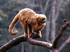 Image35 - Copia (Daniel.N.Jr) Tags: animal selvagem zoologico kodakz990