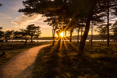 Path to the sun (Bent Velling) Tags: trees light sunset sun water norway clouds star norge path sony flare scandinavia stfold hvaler 10mm asmaly nex7 sel1018 bentvelling