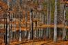 Autumn Woods (bobrizz1) Tags: platinumheartaward elitegalleryaoi magicmomentsinyourlifelevel2 magicmomentsinyourlifelevel1 magicmomentsinyourlifelevel3
