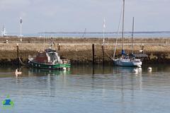 Amasia au Port du Palais, Belle-Ile en Mer