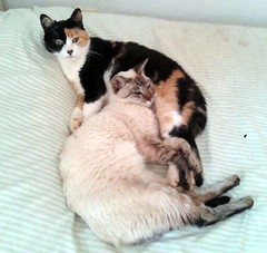 Guga and Joaquim. Best friends (Dona Minúcia) Tags: cute art animal cat relax bed peace arte paz gato cama fofo bestfriends gracinha sleepingtogether melhoresamigos dormindojuntos gugaejoaquim