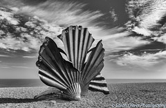 One hell of a shell... (SarahO44) Tags: 2016 6d aldeburgh beach canon england hambling kingdom maggi north pebbles scallop sea september shell shingle stainless steel suffolk uk united landscape monochrome black white sculpture photos blackandwhitephotos sky clouds