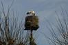Störche sind auch nur Vögel - an der Kirche; Bergenhusen, Stapelholm (25)