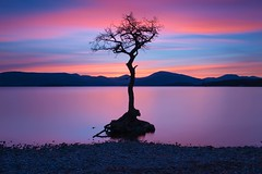 Millarochy Bay! (Stuart M Photo) Tags: loch lomond longexposure nikon 2470mm leefilters bigstopper sunset tree sky water landscape photography millarochybay scotland mountains 10stop