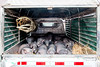 Pigs on a roadtrip (10b travelling) Tags: 10btravelling 2016 asia asie asien carstentenbrink china chine chinese datang guizhou iptcbasic leishan miao prc peoplesrepublicofchina qiandongnan southwest animal mammals pigs province southernchina tenbrink village 中华人民共和国 中国