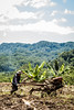 Ricefield Hijack (b_bubuh) Tags: hijack hijacking background mountains mountain trees tree tractor man men people culture farm farming green blue ground land landscape landscapes pictures photography photos sky clouds