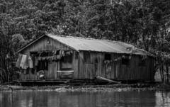 Roupas estendidas (felipe sahd) Tags: riosolimões casaflutuante roupas amazonas amazônia brasil 123bw noiretblanc