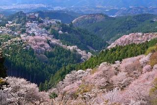 吉野山(よしのやま)