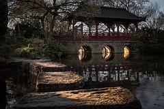 Stolpersteine (zenofar) Tags: deutschland leverkusen garten japanischergarten japanesegarden germanygarden japanese japan stones pond quiet reflection colors afternoon water bridge sonnenlicht golden sunlight