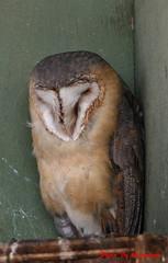 (72) Liberty's Owl Raptor & Reptile Centre