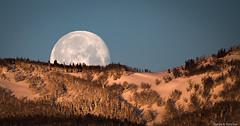 Moonset - Yellowstone (petechar) Tags: petechar charlesrpeterson landscape skyscape winter morning moon moonset trees snow yellowstonenationalpark gardiner montana panasonicgx85 panasonicleica100400