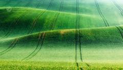 Green fields (Piotr.Krol) Tags: green landscape piotr fields bax moravia krol baxteria