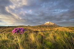 Mt Errigal - County Donegal (Gareth Wray - 13 Million Views, Thank You) Tags: county old pink flowers ireland sunset summer vacation irish sun mountain holiday mountains tree abandoned tourism nature water field grass sign set sisters landscape photography drive evening countryside site bush nikon europe day photographer mt view cloudy heather famous wide scenic landmark visit location tourist glen mount peat seven pools valley heath marsh sight poison nikkor moor bog gareth donegal mts grassy poisoned wray errigal gweedore strabane dunlewey dunlewy 1024mm derryveagh d5300