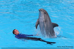 Aya v14 200614 (valentin666) Tags: france june juin dolphin dolphins parc dauphin dauphins 2014 astrix plailly