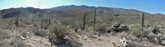 Saguaro #17 (jb10okie) Tags: park travel vacation arizona usa mountains america spring nps trails saguaro nationalparks saguaronationalpark 2013 eastdistrict