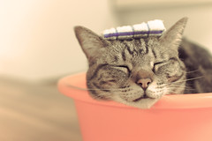 Relaxing in the hot tub () Tags: cute animal japan cat relax kyoto hottub    m43 catcafe mirrorless nekocafe microfourthirds  nekokaigi olympusomdem5 olympusm25mmf18 enjoyspa
