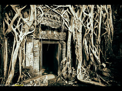 Playing Indiana Jones at Ta Prohm Temple, Angkor Archaeological Park, Cambodia, Southeast Asia (Sam Antonio Photography) Tags: world door wood old travel wild vacation plant building tree heritage tourism monument overgrown stone wall architecture asian religious temple ancient worship asia cambodia southeastasia cambodian khmer place buddhist traditional famous religion ruin entrance culture buddhism landmark angkorwat tourist architectural historic jungle siem reap tropical destination civilization portal root angkor wat taprohm ta archeology tombraider indianajones treeroots indochina prohm canon5dmarkii samantonio ancientstonetempledoorandtreeroots