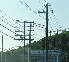 Old Telegraph Lines (en tee gee) Tags: newyork poles telegraph insulators