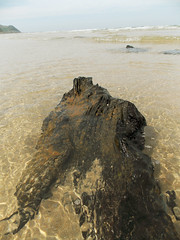 Madera fosilizada / Fossil wood (Rubn Daz Caviedes) Tags: wood sea espaa costa beach fossil mar spain madera logs playa shore cantabria troncos fsil fsiles bayofbiscay marcantbrico oyambre playadeoyambre subfossil subfsil subfsiles oyambrebeach