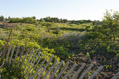 2013-06-20 Chapoquoit Bch Falmouth (AP) (05) (savebuzzardsbay) Tags: beach massachusetts falmouth buzzardsbay westfalmouth chapoquoitbeach