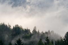 Morning Mist (Irene Becker) Tags: morning mist mountain fog forest serbia balkan srbija taramountain zaovine bajinabata westserbia zlatibordistrict irenebecker nacionalniparktara imagesofserbia irenebeckereu