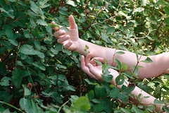 Leafy Dreams (Miss Marisa Renee) Tags: summer sunlight green nature leaves sunshine digital canon palms hands colorado shadows arms skin fingers july sunny shade stems greenery dreamy lovely leafy naturalarea onewithnature canon400d marisarenee summer2014 july2014