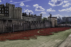 Blood Swept Lands (JAY-PEGG) Tags: london towerbridge landmarks poppies ww1