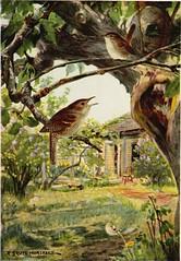 Anglų lietuvių žodynas. Žodis oven-bird reiškia krosnelė-paukštis lietuviškai.