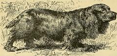 Anglų lietuvių žodynas. Žodis sycophant reiškia n palaižūnas, šunuodegautojas lietuviškai.
