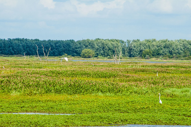 Goose Pond Fish & Wildlife Area - August 12, 2014