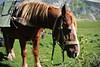 Rondello e i cardi (Gaia83) Tags: veterinarifotografi trekkingconimuli