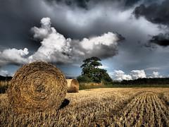 Hay Bales - Staughton Highway (davepickettphotographer) Tags: uk summer landscape olympus cambridgeshire huntingdon 2014 em1 stneots olympuscamera huntingdonshire greatstaughton