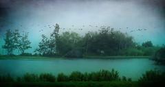 IMG_0152 wish I could fly... (pinktigger) Tags: trees holland water netherlands dutch birds landscape flock nederland onderdijk devooroever
