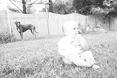 Baby and Dog (AlexRuz) Tags: baby greatdane dane sherman babydogs littledoglaughednoiretblancet notarealtank