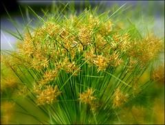 Bouquet radieux (josboyer) Tags: flowers jardinbotaniquedemontréal